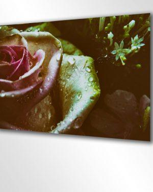 Eine Rose am Morgen. Hier sieht man ein Wandbild aus gebürstetem Aluminium. Die Rose im Morgentau, zarte Farben und Tautropfen.